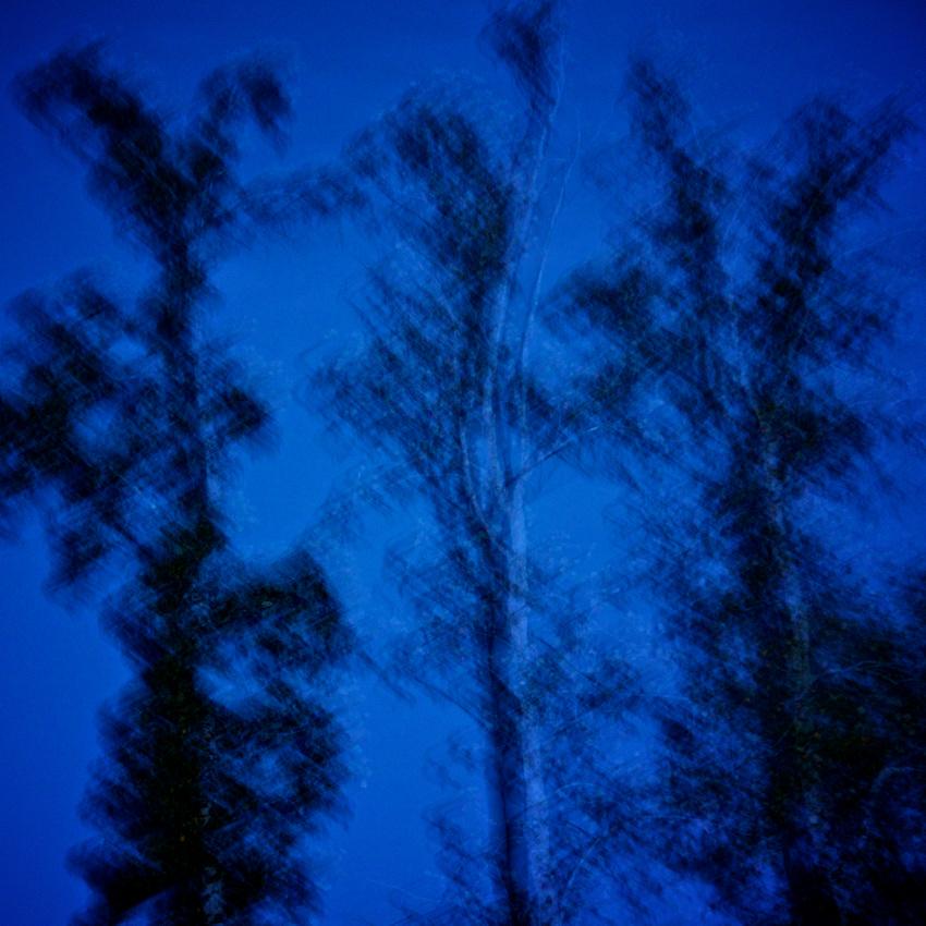 Three Trees Blues