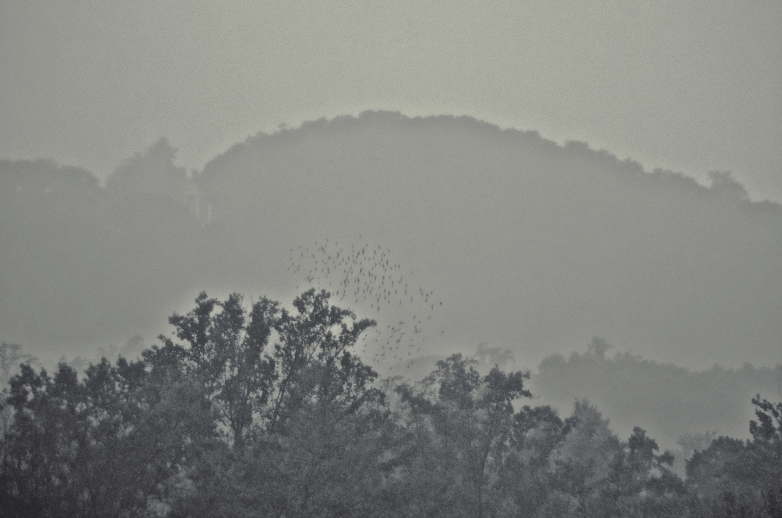 Monticello and Flock in Rain