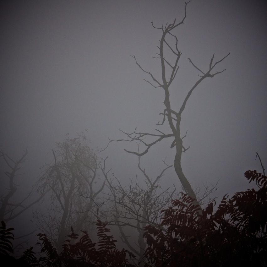 Enshrouding, Blue Ridge Parkway